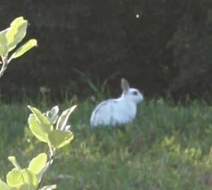 Après les chèvres de Google, le lapin de BienManger.com